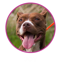 CDCI_website_HomePage_What-to-Expect_Joy