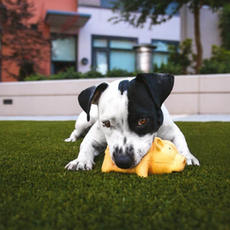 Ways to Keep Your Dog Healthy (and Busy)