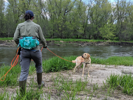 What is a conservation dog?