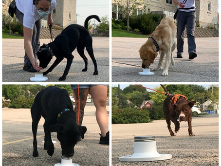 What's That Smell? How a Dog Learns to Find a Scent