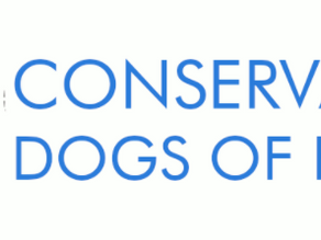 Sniffing Around the Globe: Conservation Dogs of Hawai'i
