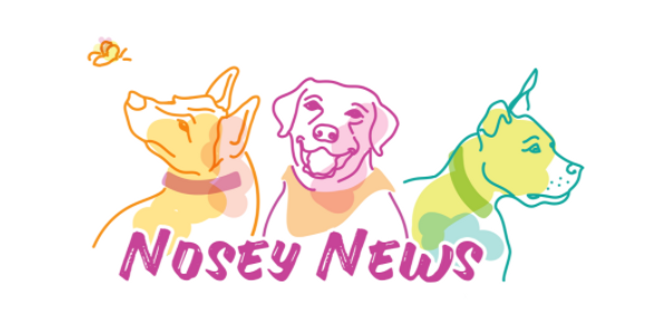 NoseyNews.png