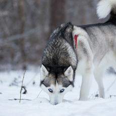 Canine Enrichment Games & Activities