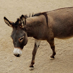 burro-2_edited.jpg
