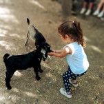 Granja Escuela 2019 - Animales