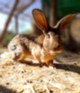 conejo-1_edited.jpg