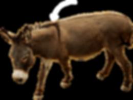 burro-explicación_edited.png
