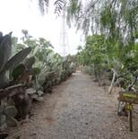 Plantaciones Sinérgicas