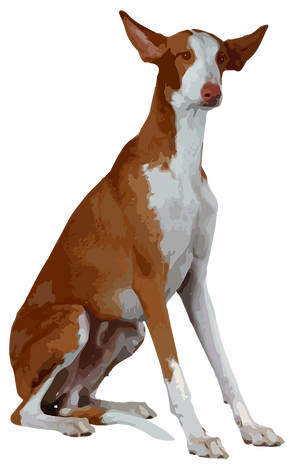 podenco-vector.png