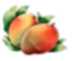 mango-injerto.png