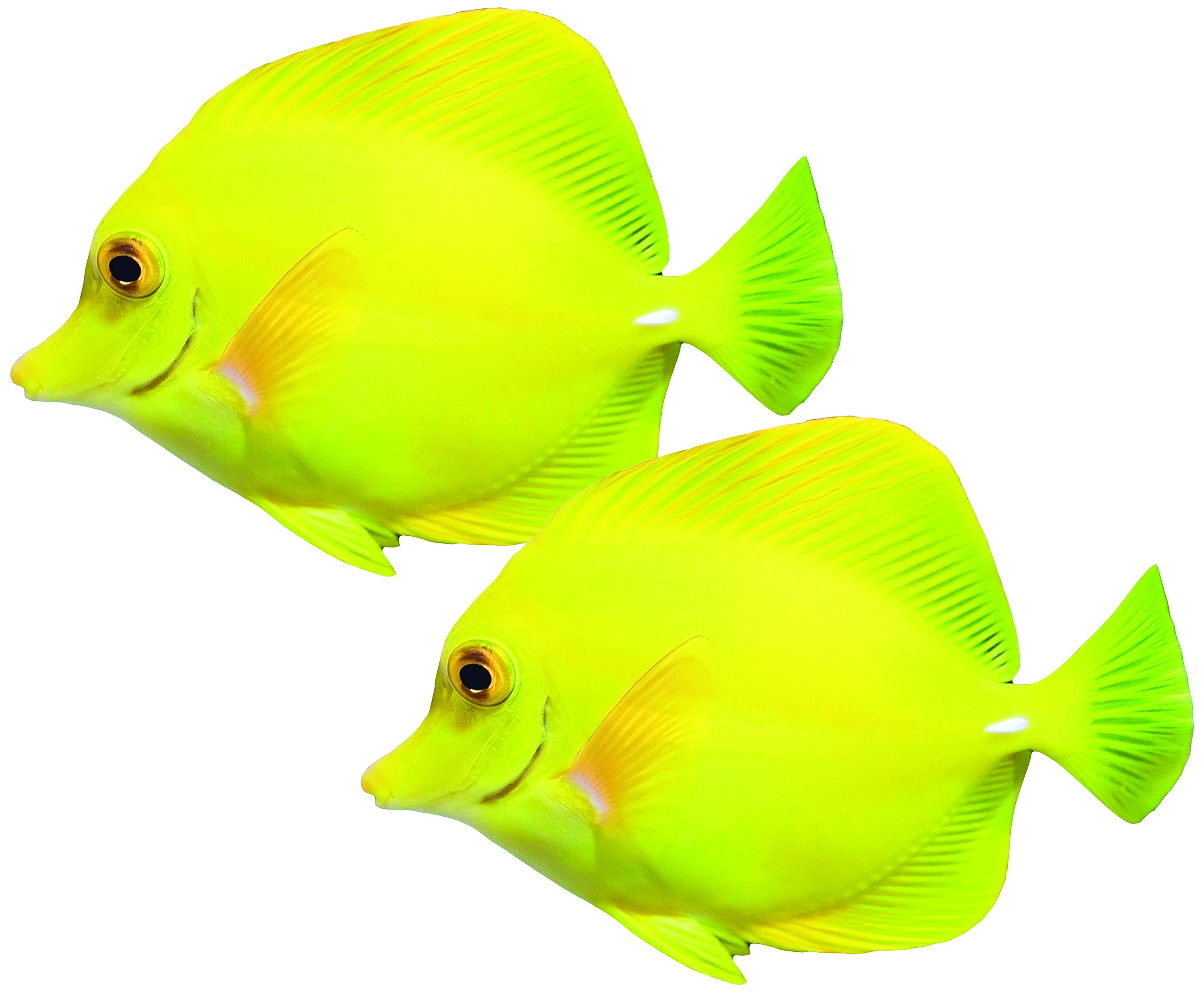 2Fish.jpg