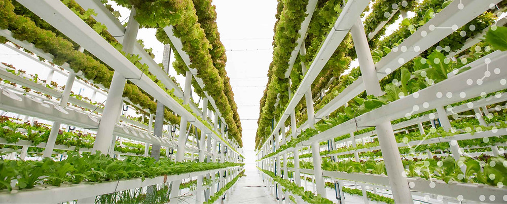 Food Tech, Vertical Farming, AgTech, Food Technology
