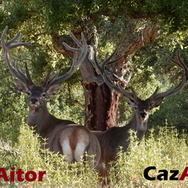 CazAitor 1.png