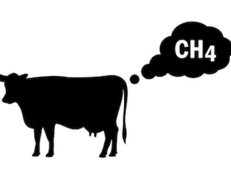 Biochar et élevage font bon ménage