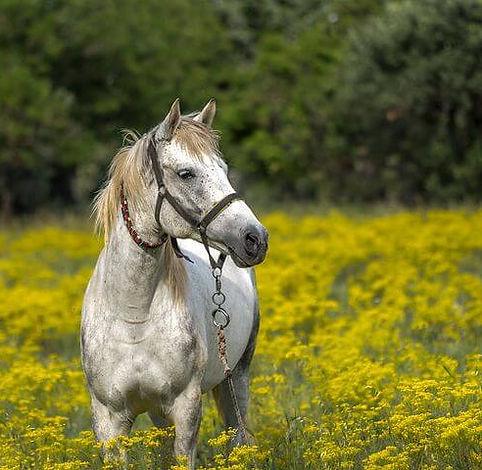 horse-3419146__480.jpg