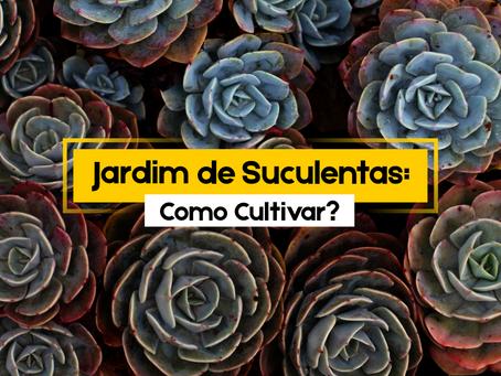 Jardim de Suculentas: Como Cultivar?
