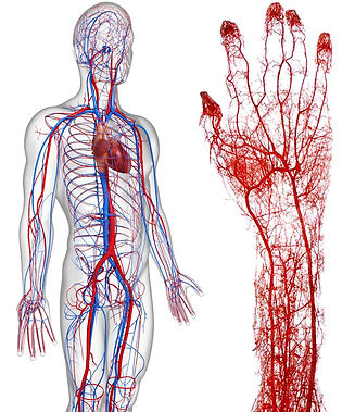 set circulatorio.jpg