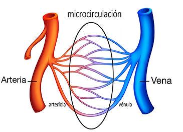 microcirculacion2.jpg
