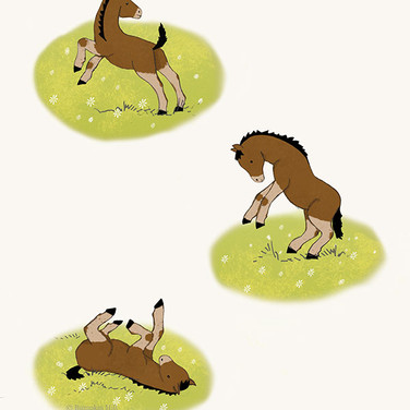 A page from a story about an orphan Foal I hope one day to be published.