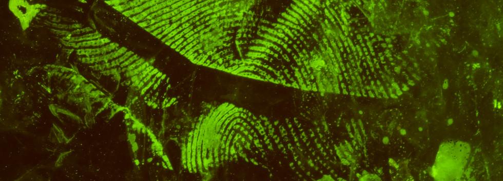Fingerprints on Grocery Bag