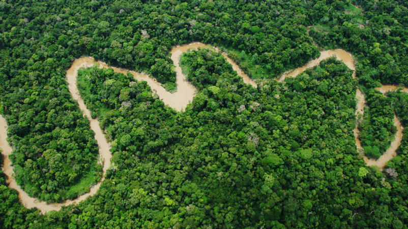 andes-amazon-fund-rainforest-2-800x800.j