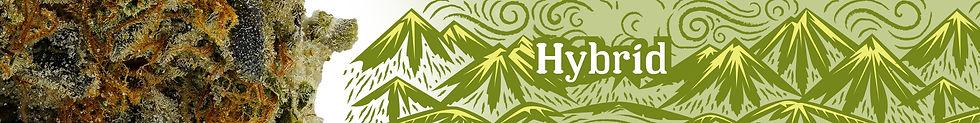 HC_Header_hybrid_1.jpg