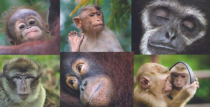 Figure_cute_monkey.jpg