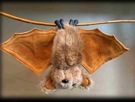 Bat 8 .jpg