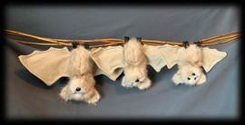 3 white Bats .jpg