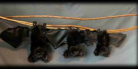 3 Black Bats .jpg
