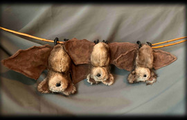 3 Brown Bats .jpg