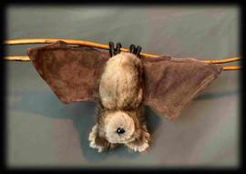Bat 6 .jpg