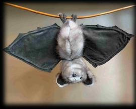 Bat 7 .jpg