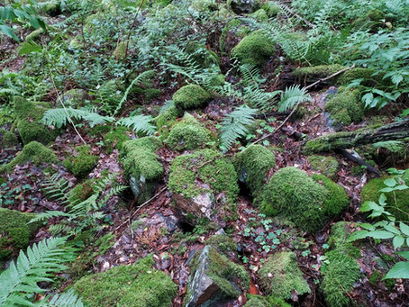 Ulkoilua ja hyvinvointia metsässä liikkuen