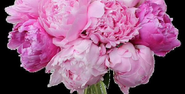 זר שרה ברנהארט 15 פרחים