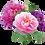 Thumbnail: זר לבן - 15 פרחים