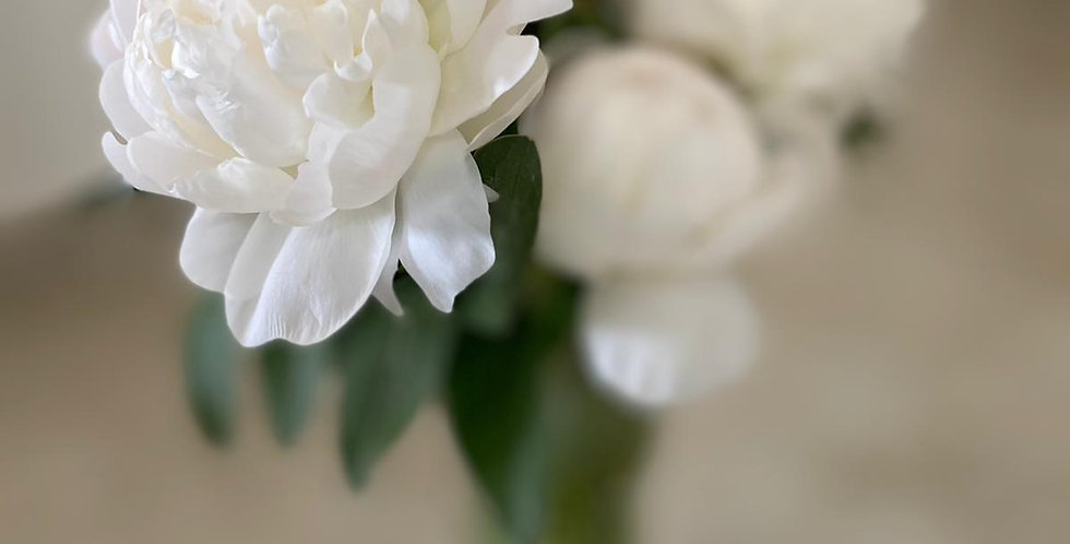 זר לבן - 15 פרחים