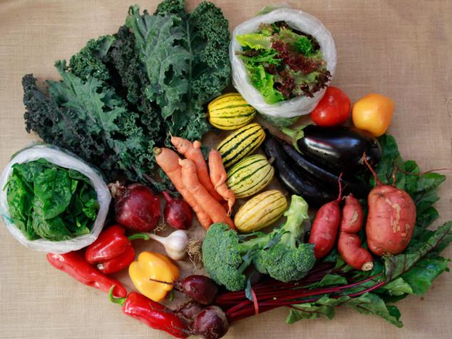 large vegetable share_4.jpg