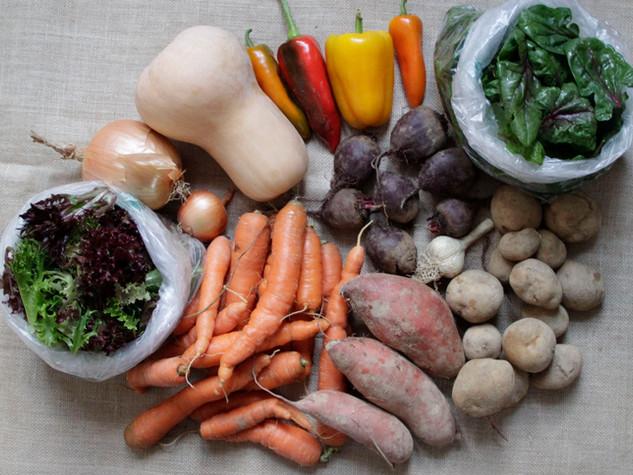 large vegetable share_7.jpg