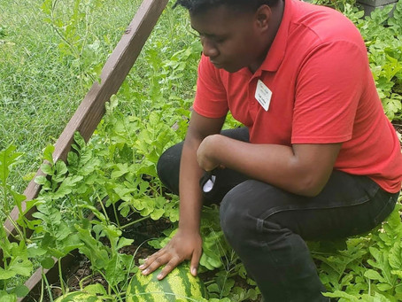 Youth Earn and Learn Provides Service to Community