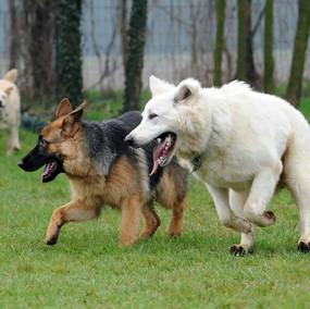 Foto puppy class Merate 15.jpg