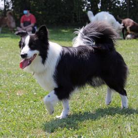 Foto puppy class Merate 21.jpg