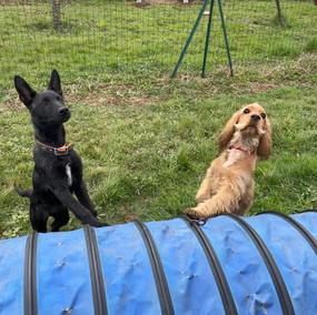 Foto puppy class Merate 10.jpg