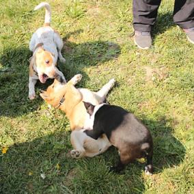 Foto puppy class Merate 19.jpg