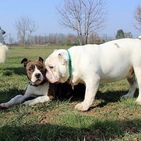Foto puppy class Merate 23.jpg
