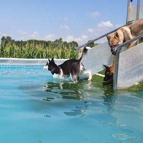 Piscina per cani Tabui (27).jpg