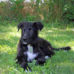 Foto puppy class Merate 12.jpg