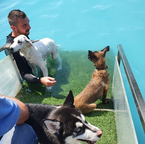 Piscina per cani Tabui (38).jpg