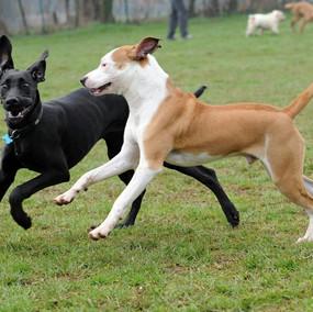 Foto puppy class Merate 11.jpg