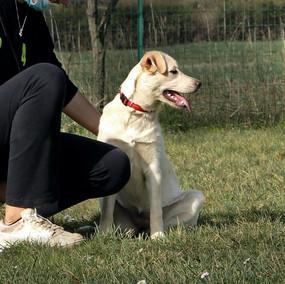 Foto puppy class Merate 24.jpg